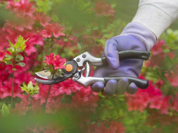 pruning-1024x768