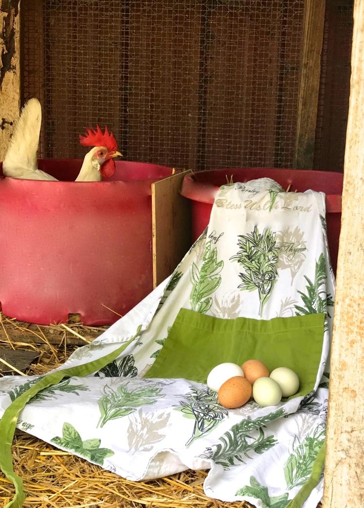 apron eggs chickens.jpg